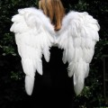 Angelic Wings Psychic Reader Thumbnail